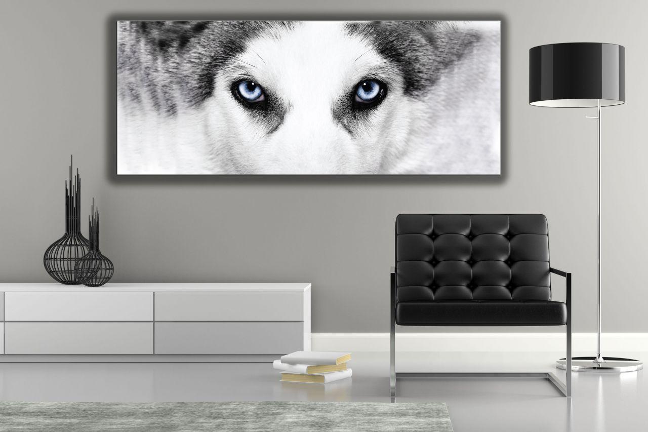 תמונת קנבס כלב האסקי סיבירי